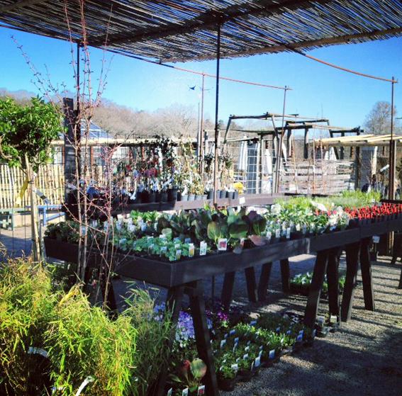 rosendals cafe trädgård butik